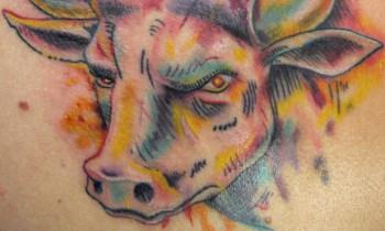 bg-constantino-bull